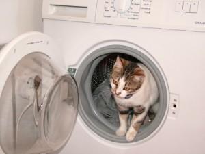 sally-waschmaschine